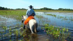 pantanal experience (1)