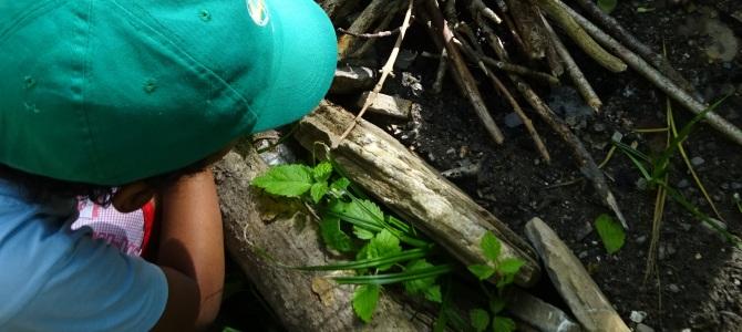 Wald-Geburtstag